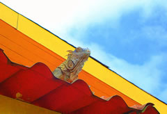 R. E. iguana Costa Rica Vacations Photo